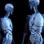 Fungsi Organel Sel Untuk Tubuh
