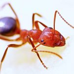 Banyak Semut di Mobil? Gunakan Cara Berikut Untuk Membasminya!