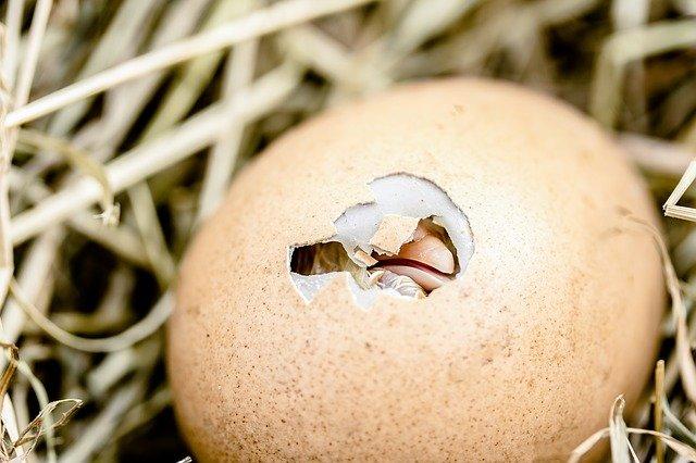 Rebus Telur Berapa Menit? Ini Dia Cara Merebus Telur Berdasarkan Tingkat Kematangannya